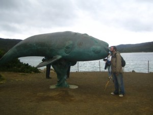 Stephen Walker sculpture passed away 2014. The Cockle Creek Whale.